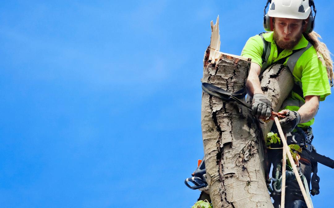 Muss der Vermieter die Kosten für das Fällen von Bäumen aus eigener Tasche zahlen?