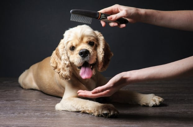 Dürfen Hunde während des Lockdowns zum Friseur?